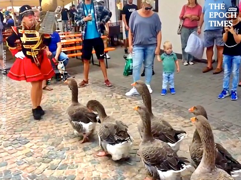 Disciplined Geese Marching in a Band