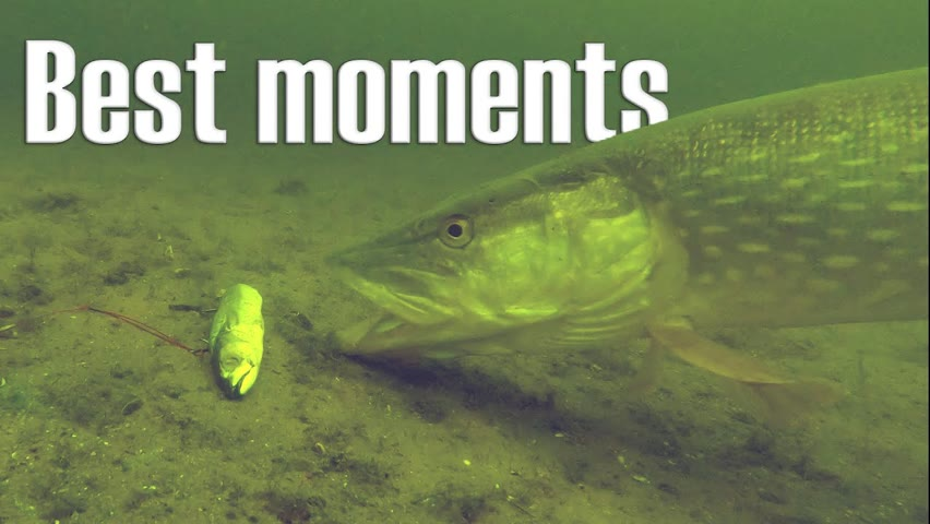 Best fishing moments underwater compilation!