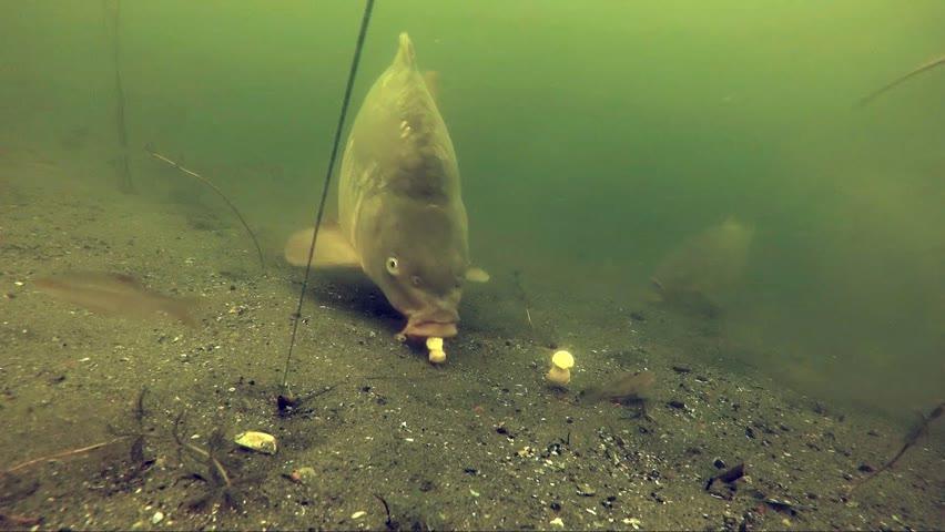 Underwater live runs