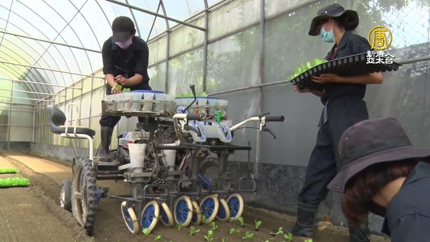 高雄成立蔬菜機械代耕團!為短缺人力預做準備