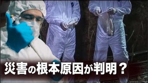【ニュース・インサイト】コロナウイルスでコウモリを感染させる 災害の根本原因が判明?