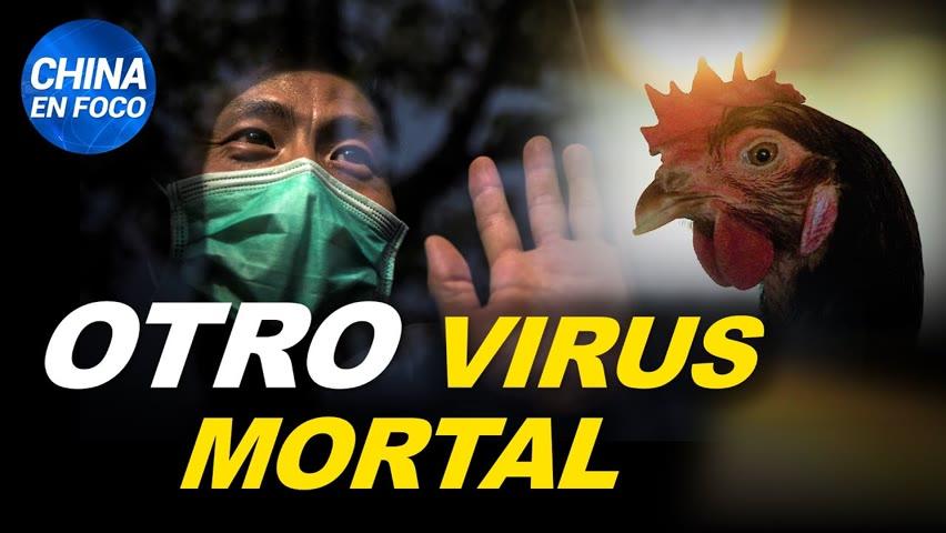 China reporta casos humanos de gripe aviar. ¿Encubren muertes tras vacunación masiva?