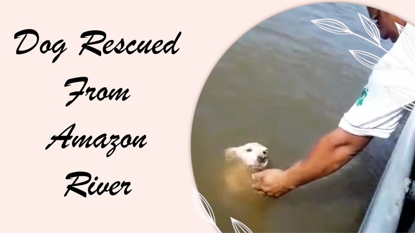 Dog Rescued From Amazon River