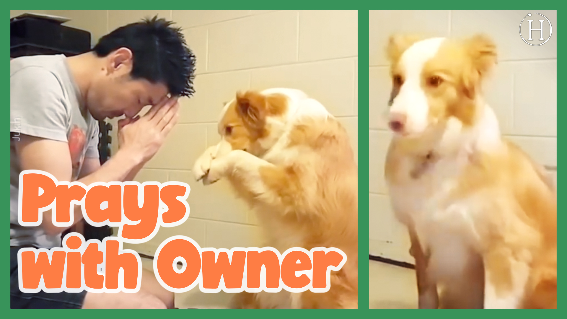Dog Prays With Owner | Humanity Life