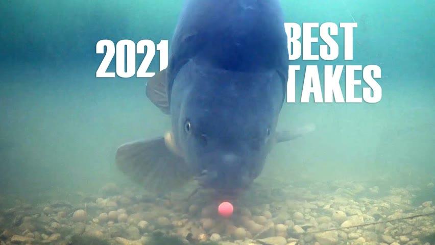 Best underwater takes 2021 (Carp, catfish and sturgeon)