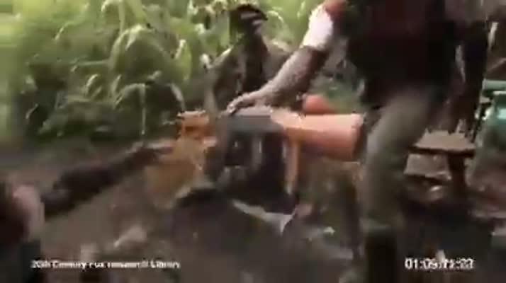 猴子开枪打死人!多么具有讽刺意味,也许很好玩
