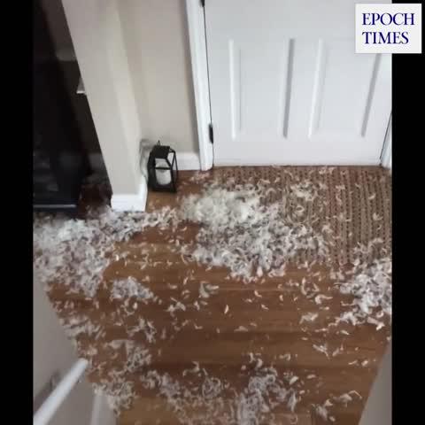 Großes Kissen-Massaker eines glücklichen Hundes