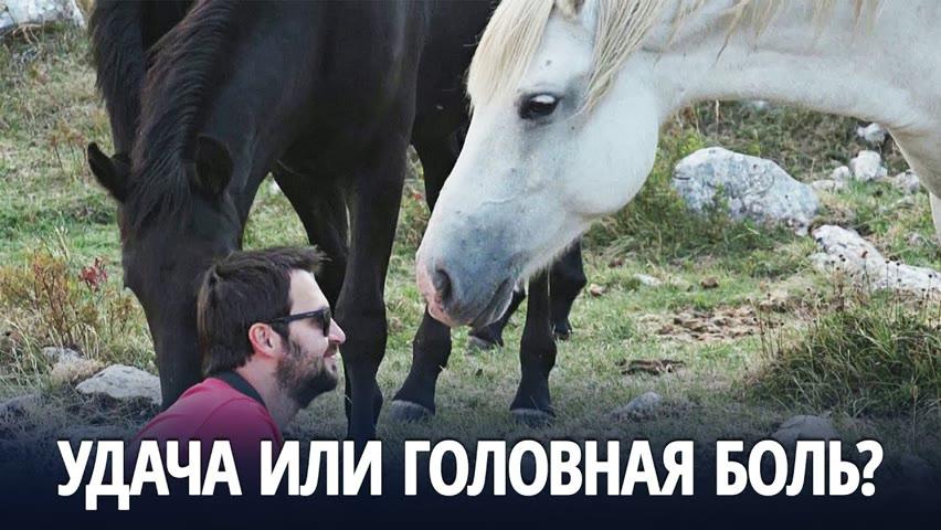 Одичавшие лошади на западе Боснии привлекают туристов, но вредят скотоводам