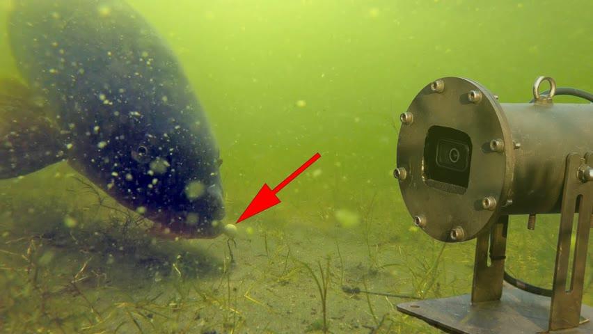 Carp fishing with 3 underwater cameras!
