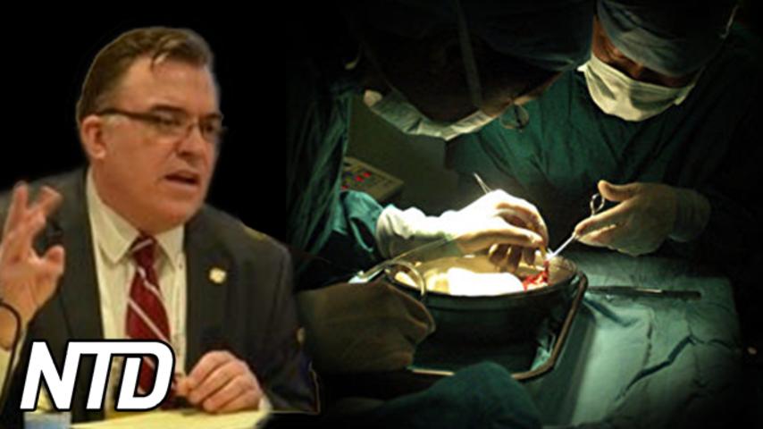 KKP:s organhandel – kommersiellt mord | NTD NYHETER
