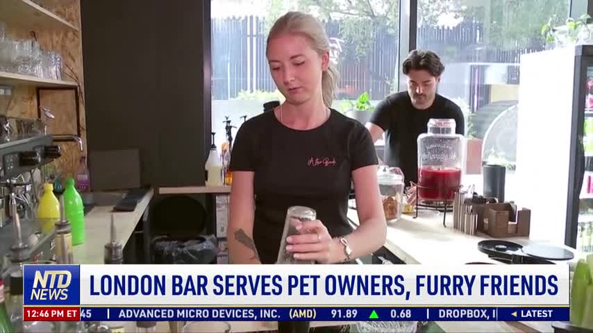 London Bar Serves Pet Owners, Furry Friends