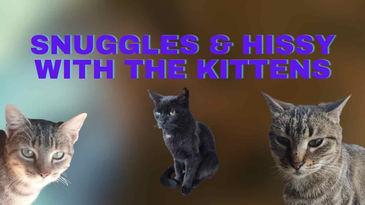 Snuggles & Hissy with the Kittens!