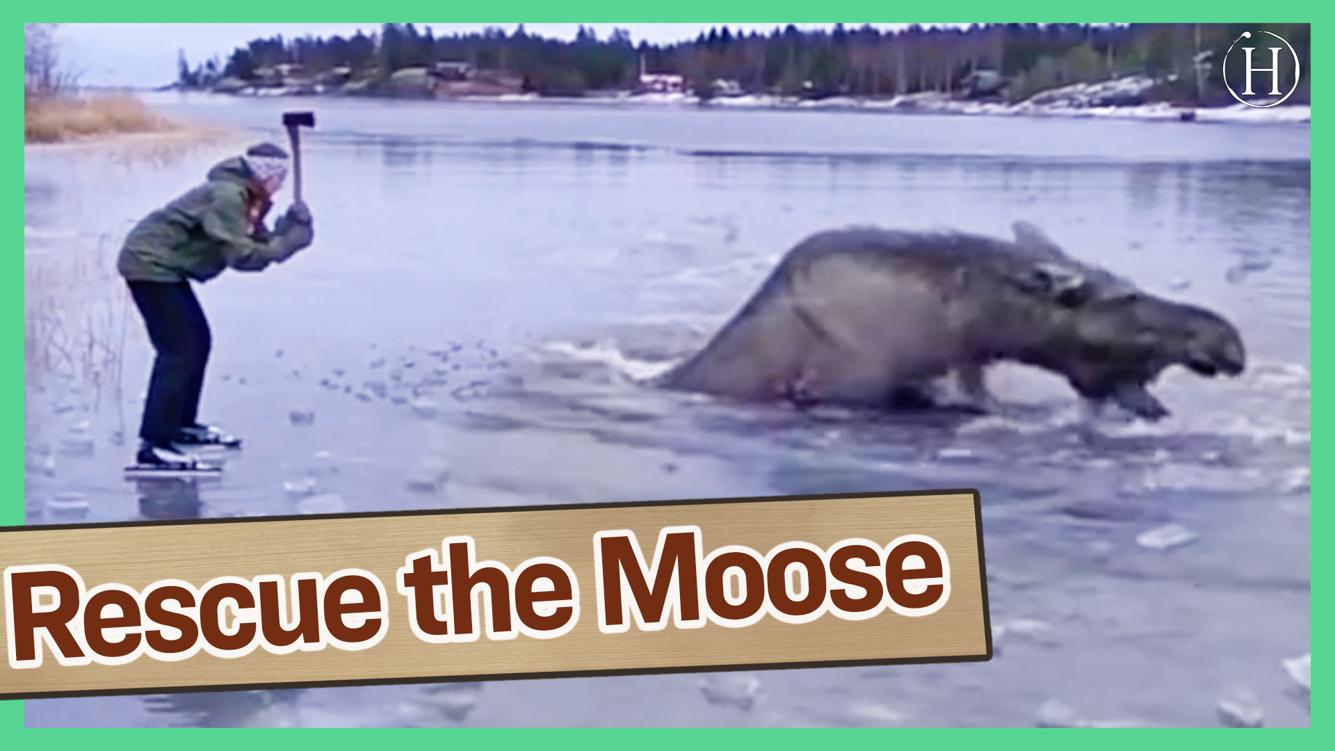 Saving a Moose From Drowning In Ice | Humanity Life