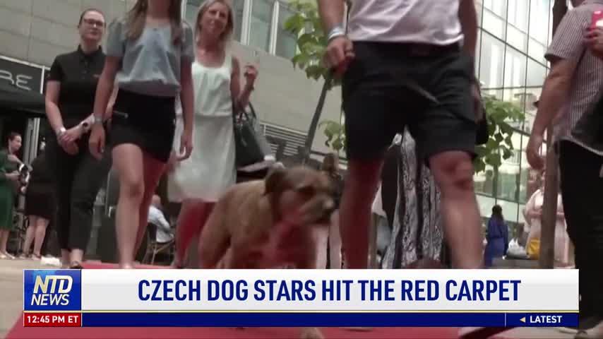 Czech Dog Stars Hit the Red Carpet
