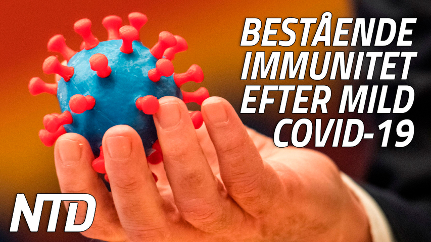 Bestående immunitet efter mild covid-19, enligt ny studie | NTD NYHETER