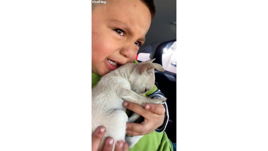 Boy Cries over Puppy's Vaccination