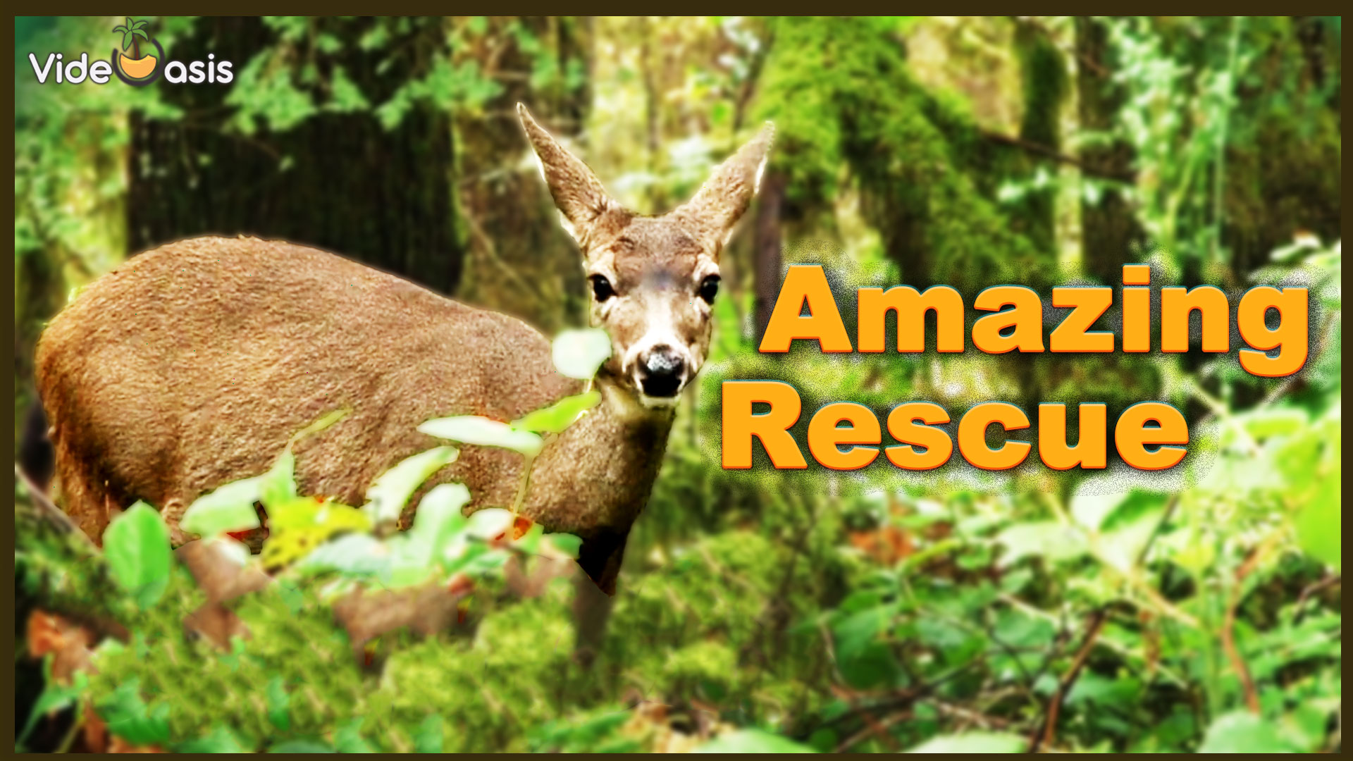 VideOasis Amazing-Rescue-I |VideOasis