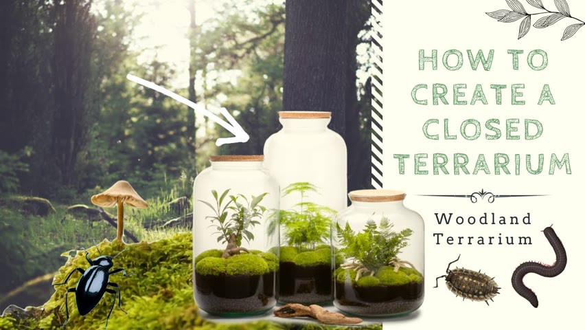 How to Create a Closed Native Terrarium | Ecosystem in a Jar