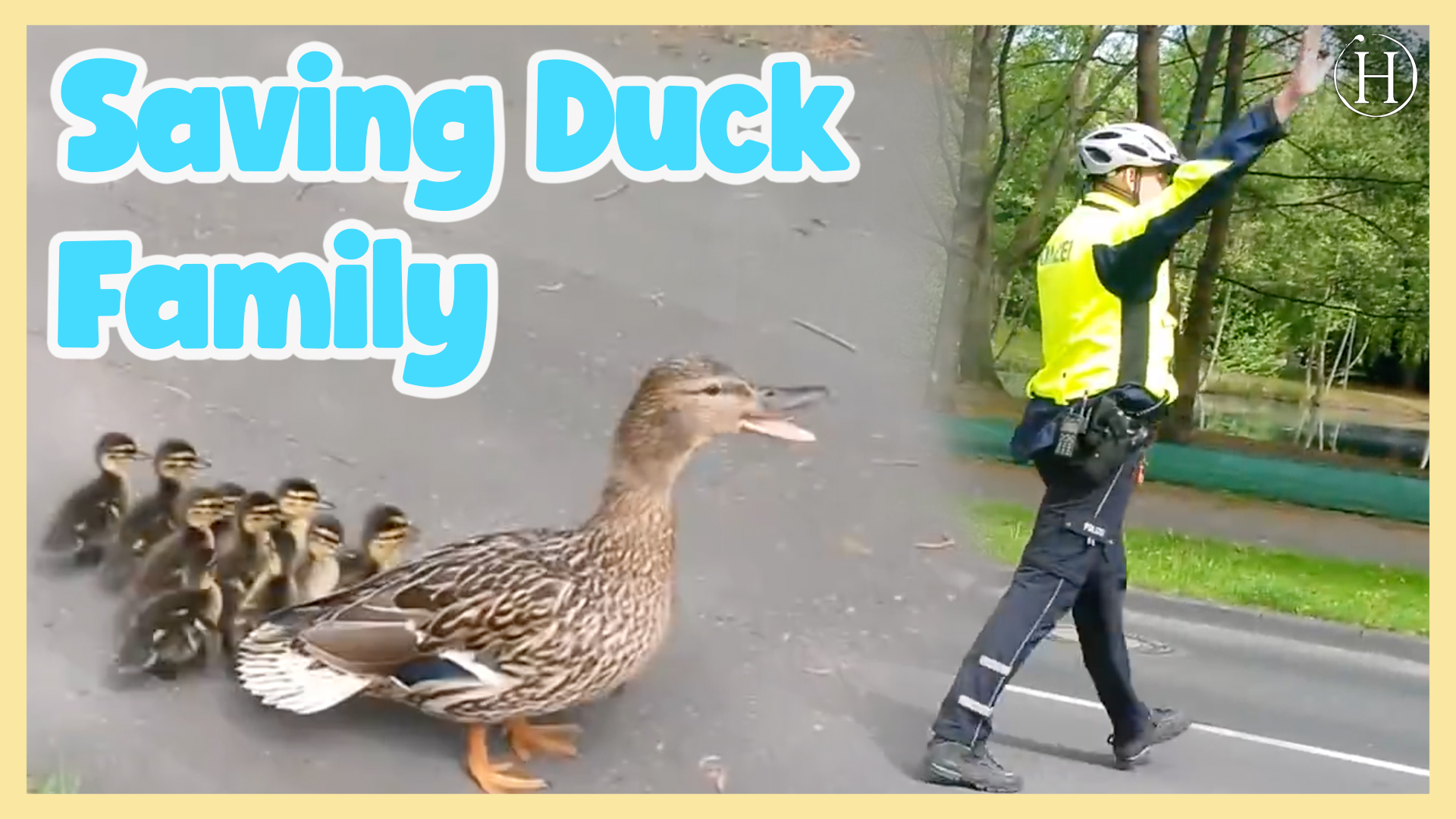Saving a Duck Family Crossing a Busy Street in Cologne | Humanity Life