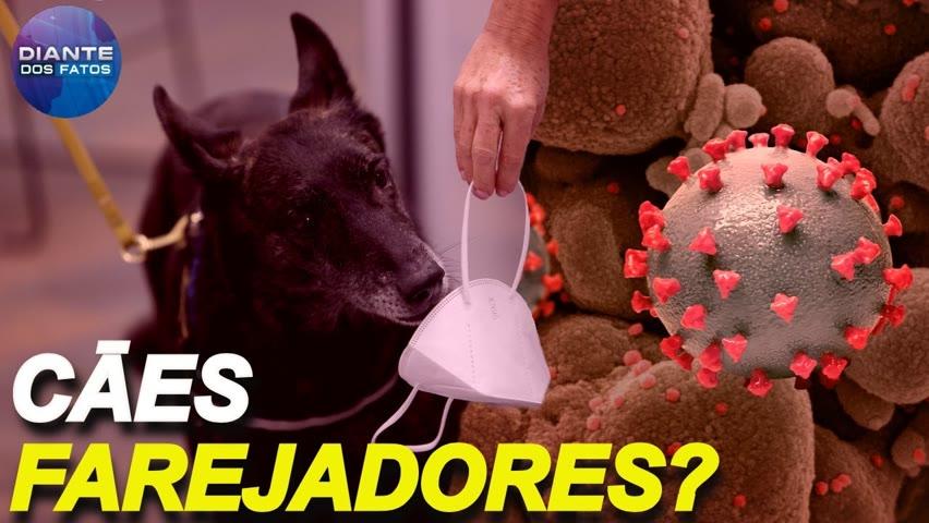 Cães farejadores do vírus?; brasileira é encontrada morta no deserto ao tentar emigrar para os EUA