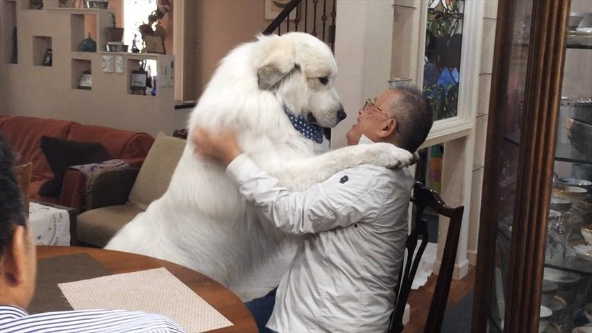 A Dog Breeder Has Come