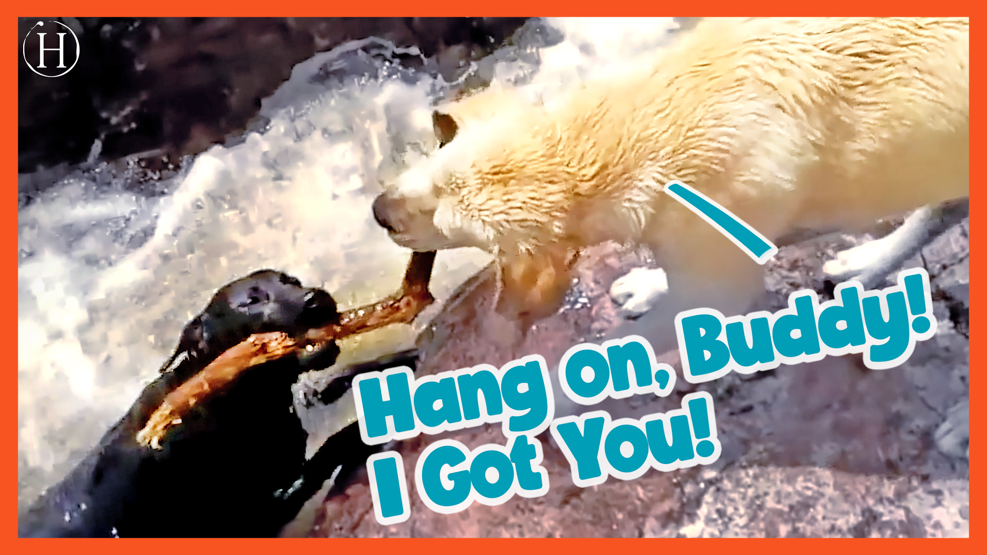 Dog Saves Friend from Drowning | Humanity Life