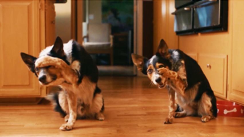 PUPS ALONE  2021 Trailer  Comedy  Family  1080p