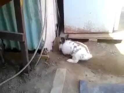 Rabbit Digs Hole to Rescue Trapped Cat