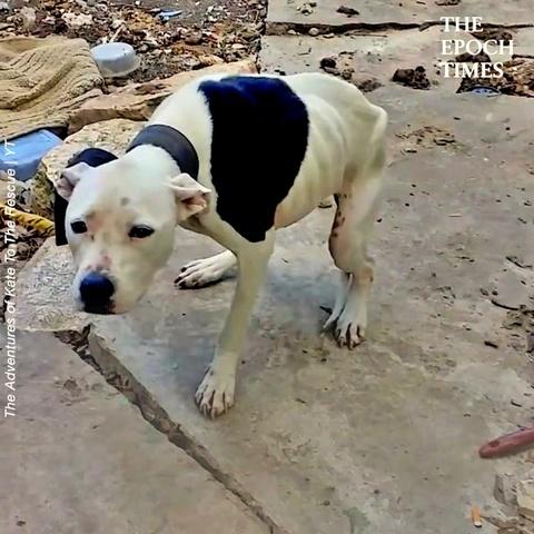 Rescue a Dog Left in Backyard