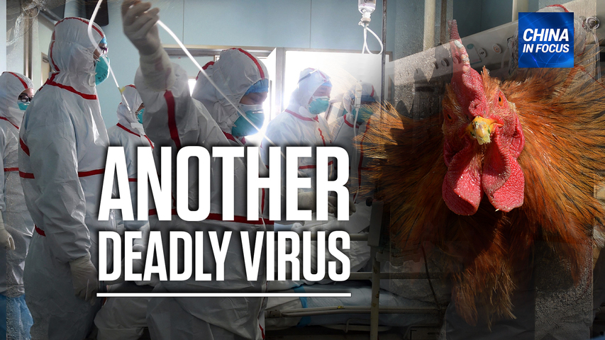 China reports human case of bird flu; 780+ Taiwanese die after getting vaccinated | China in Focus