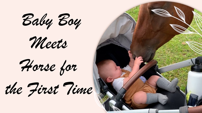Baby Boy Meets Horse for the First Time