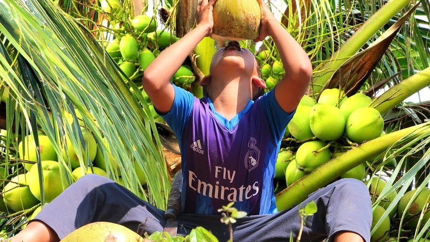 Natural Coconut Fruit