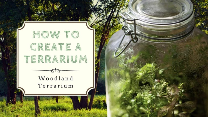 How to Create a Closed Terrarium | Ecosystem in a Jar