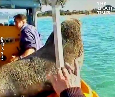 A Surprise Visit From Friendly Sea Lion