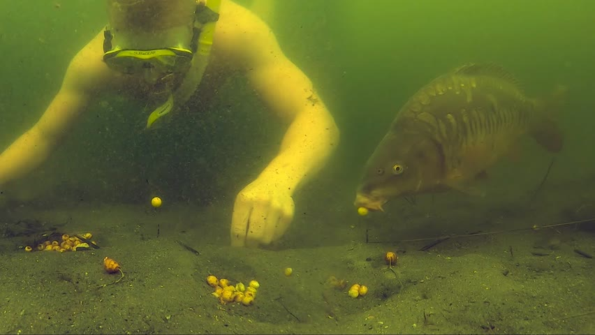 Compilation of carp getting hooked underwater.