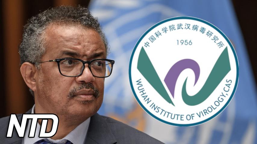WHO vill att Kina tillhandahåller rådata om virus | NTD NYHETER