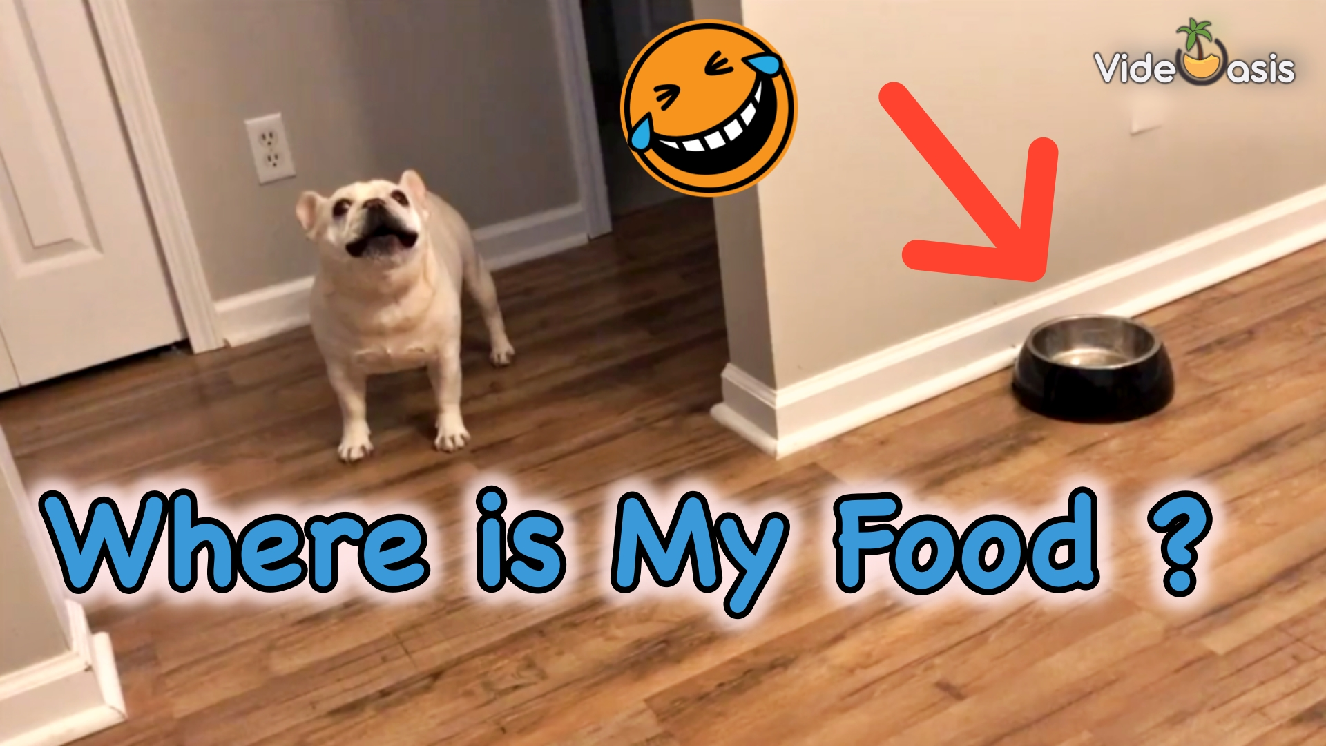 French Bulldog Throws Tantrums for Not Getting Food|VideOasis