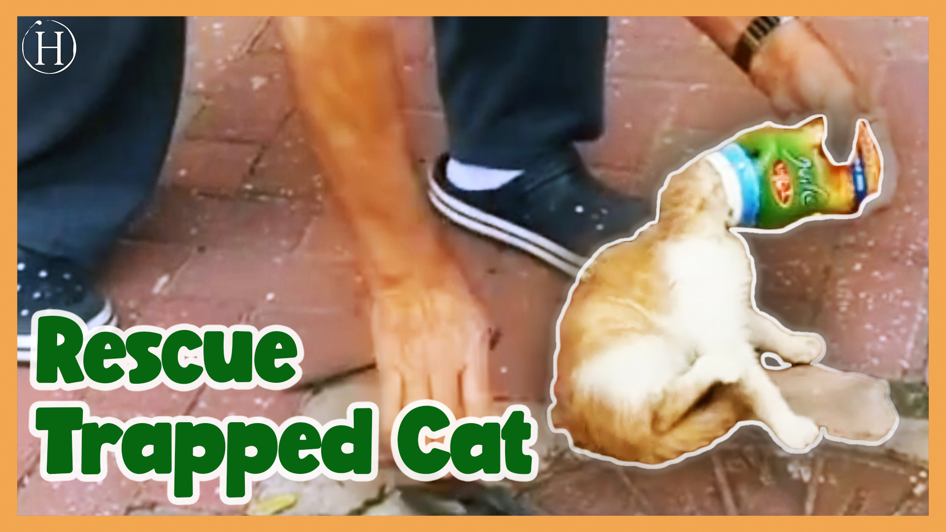 Rescuing a Cat Stuck In a Can | Humanity Life