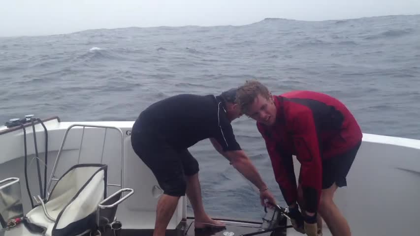 Possible World Record Tuna Caught in New Zealand