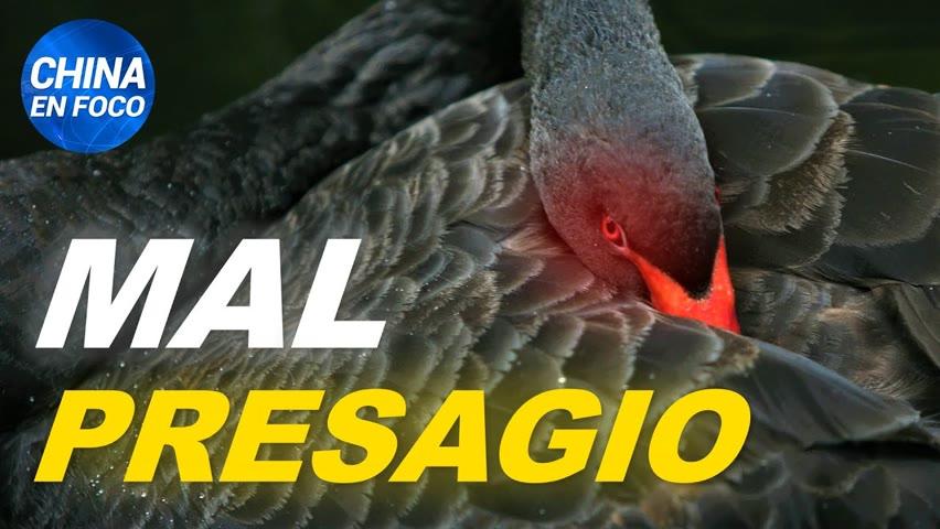 Cisne negro trae un mal augurio para China. Encierros desatan la furia en ciudadanos chinos