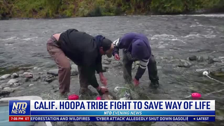 California Hoopa Tribe Fight to Save Way of Life