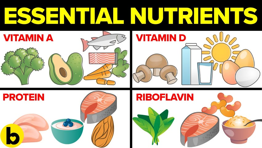 9 Most Essential Nutrients And Why They Are Important