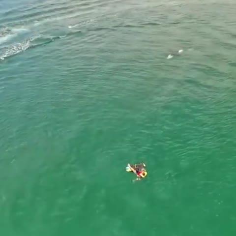 """Neugieriger Orca erkundet Surfer in """"seinem Element"""""""