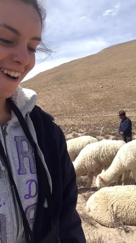 Friendly Alpaca Wants a Selfie