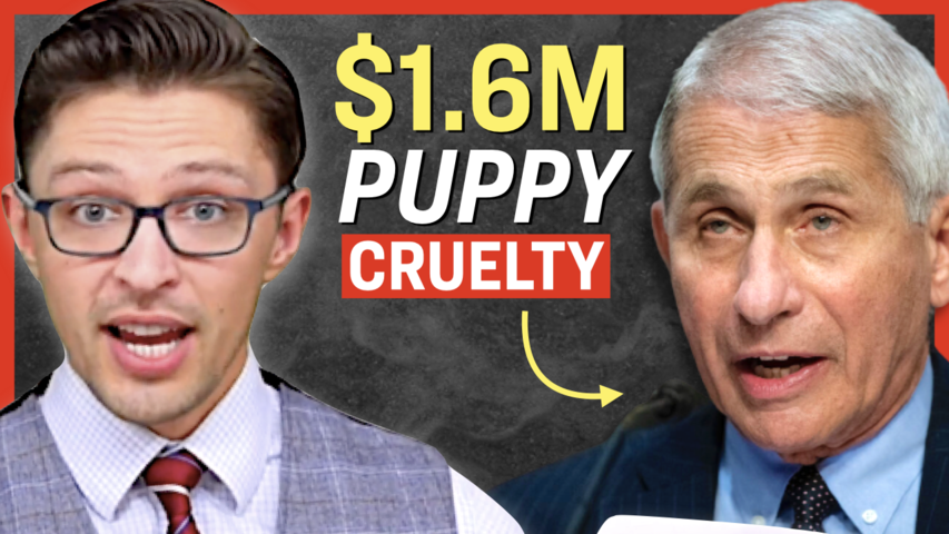 Fauci's Agency Spent $1.6 Million on Torture-Like Experiments on Beagle Puppies: Report