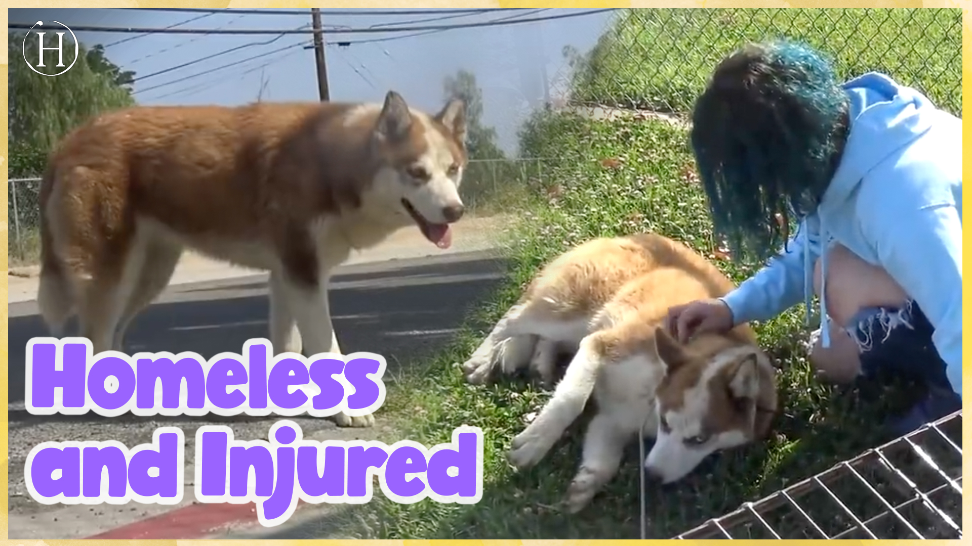 Homeless, Injured, Scared To Trust Humans... | Humanity Life