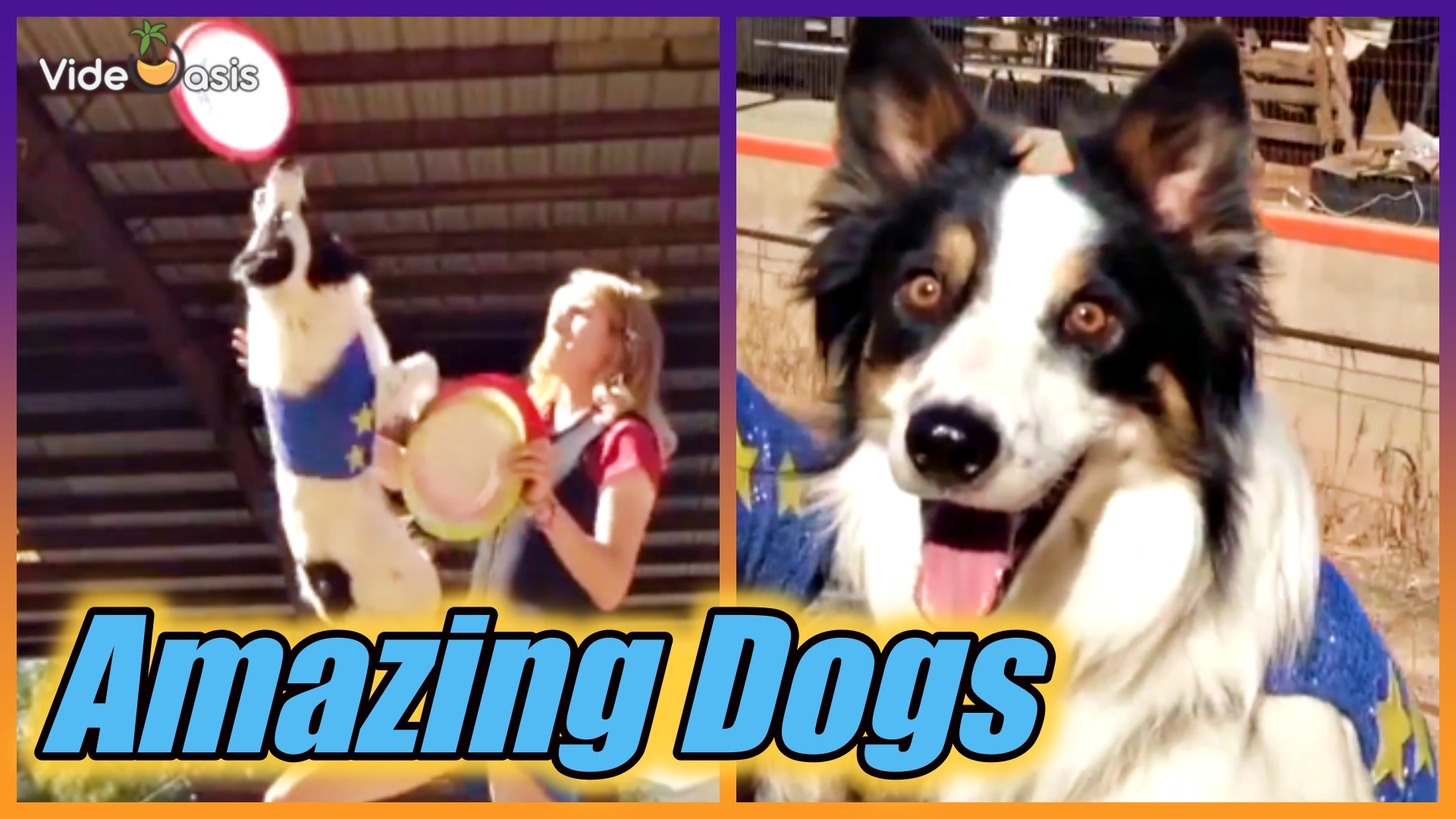 These Stunt Dogs Will Make You Astonished|VideOasis