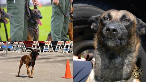 Florida police dog involved in over 200 arrests has died