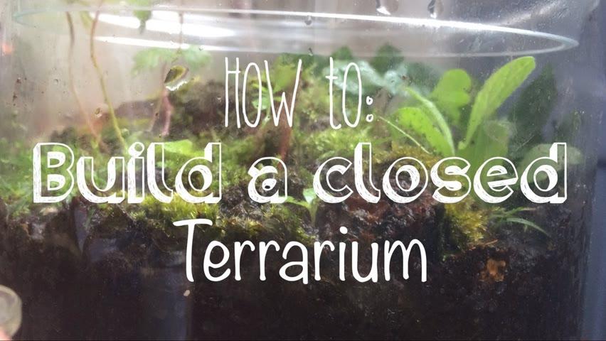 How to build a closed Terrarium