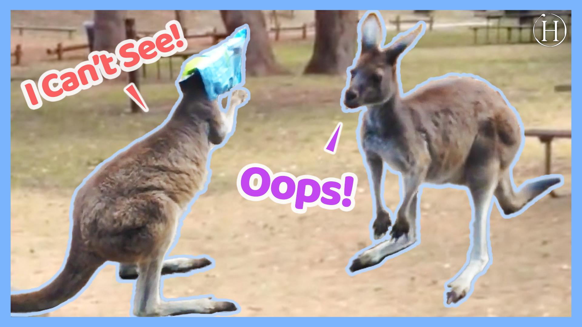 Kangaroo Gets Head Stuck In a Bag of Chips | Humanity Life